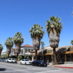 Fan Palms line Palm Canyon Dr in Palm Springs