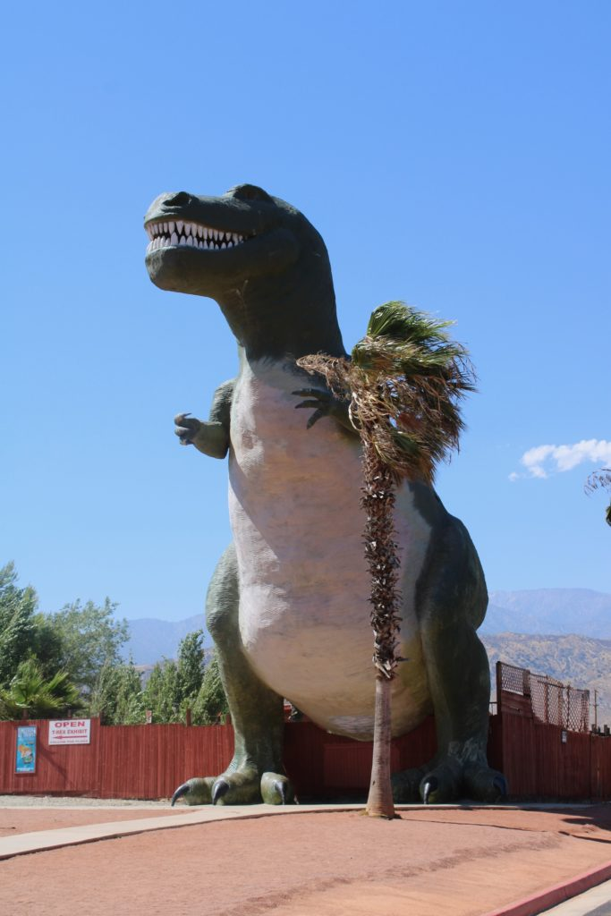 Mr. Rex the Tyrannosaurus rex with palm tree for scale