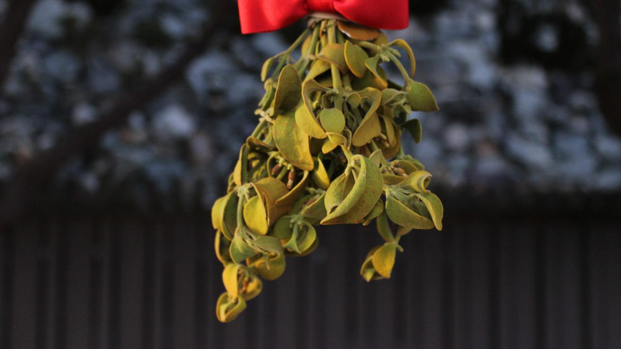 sprig of mistletoe